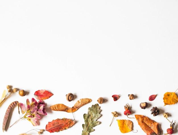 Eikels, zaden en bladeren van wilde bomen geïsoleerd op wit