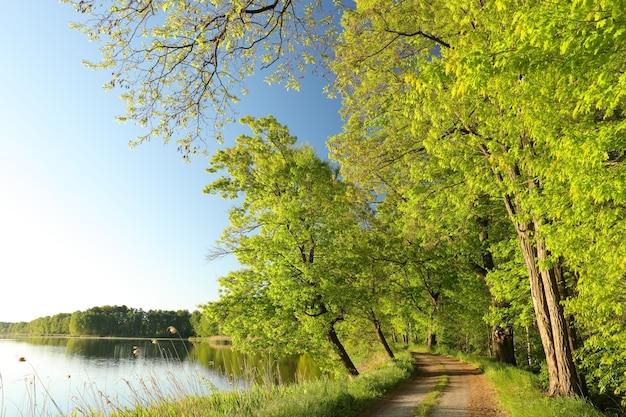 Eiken aan de rand van een meer op een zonnige lentemorgen