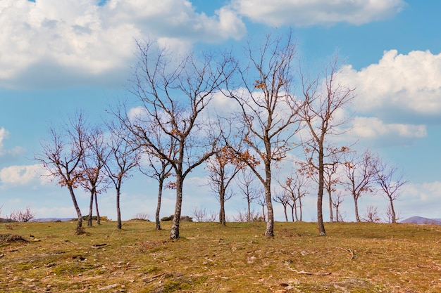 Eiken in de winter in el espinar, in segovia. nationaal park sierra de guadarrama. panoramische fotografie van geïsoleerde bomen