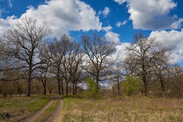 Eiken in het vroege voorjaar op blauwe hemel
