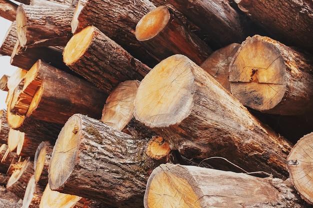 Eiken stammen worden gestapeld op een stapel, onder een hoek, in dwarsdoorsnede en lengte. logging