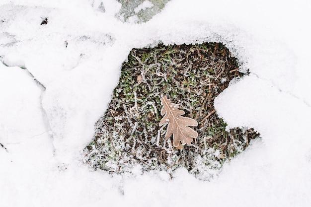 Eikenblad op gras in sneeuwkader, plat leggen. droog folio in vorstomgeving. stukje herfst in de winter