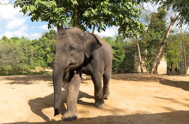 Elefant buiten