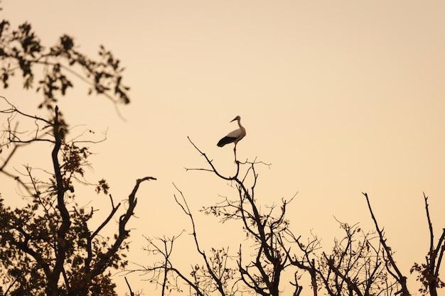 Elegante ooievaar zat op een dode boom