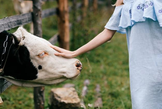 Elegante vrouw blauwe romantische jurk aanraken van de koe op het platteland