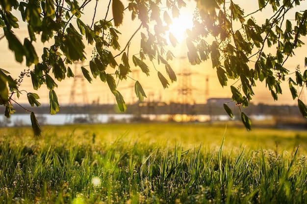 Elektrische leidingen in de natuur tegen de achtergrond van de ondergaande zon