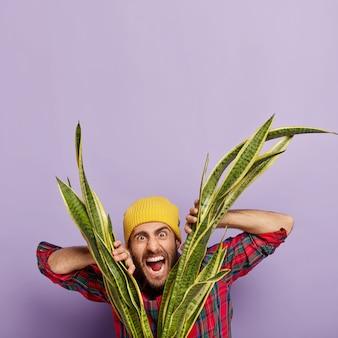 Emotioneel geïrriteerde blanke mannelijke bloemist schreeuwt negatief vanwege vermoeidheid kijkt door sansieveria
