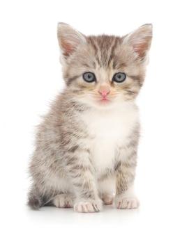 En katje dat geïsoleerd stelt kijkt