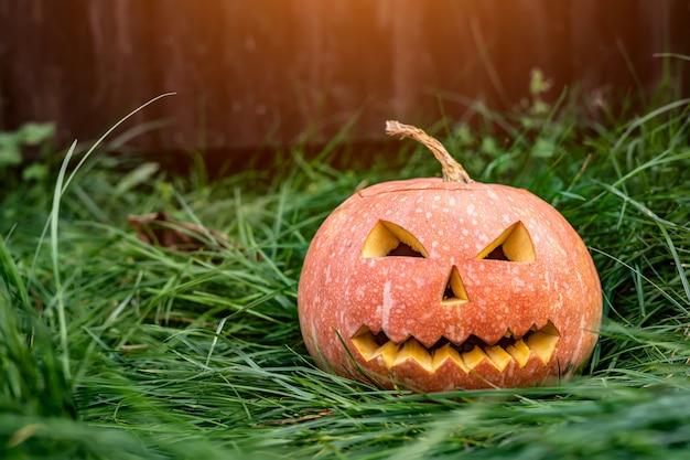 Enge pompoen voor halloween op het gras.