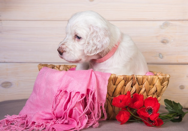 Engelse setter puppy in een houten mandje met bloemen