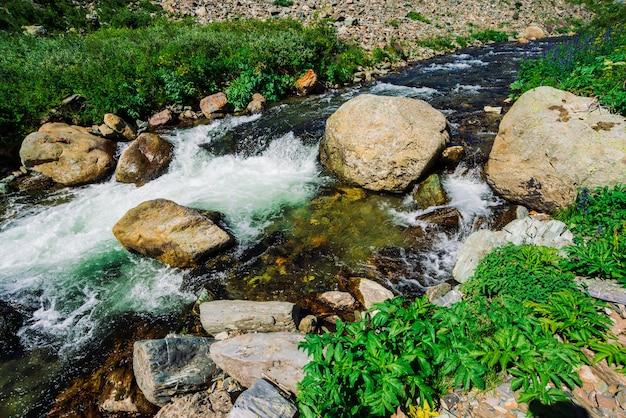 Engelwortel en andere rijke vegetatie groeien langs bergkreek dicht omhoog. snelle waterstroom met stenen in rivier onder groen gras en ander groen. hooglandenlandschap met planten van altai.