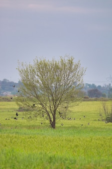 Enige boom met vogels erop in een groen veld