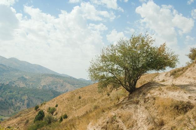 Enige boom op een heuvel tegen bergen en hemel. aard van centraal-azië