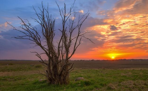 Enige boom op veld tijdens zonsondergang