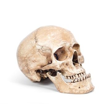 Enige menselijke die schedel op witte achtergrond wordt geïsoleerd