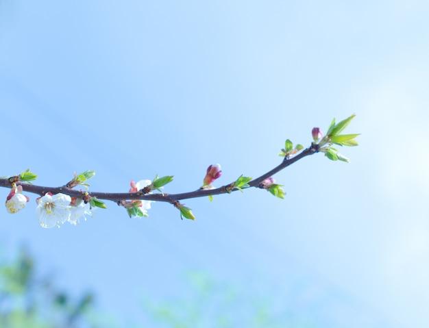 Enkel takje met groene toppen en eerste lentebloemen tegen de blauwe hemel