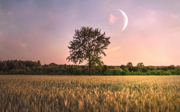 Enkele boom in het veld en een maan eroverheen