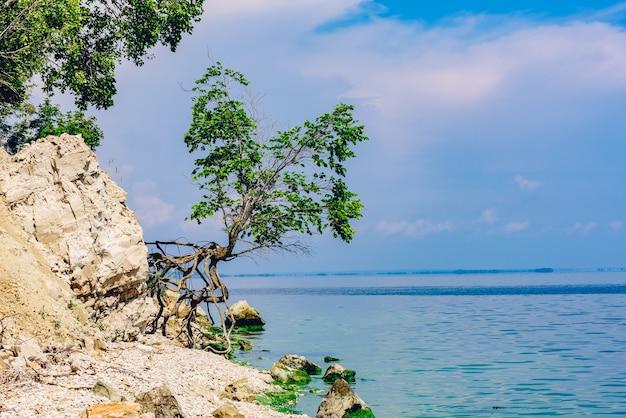 Enkele boom op de rotsachtige kust op zomerdag