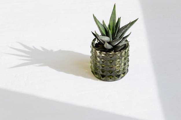 Enkele groenblijvende vetplant haworthia in glazen pot met schaduwen voor zon.