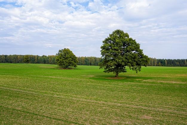 Enkele grote bomen midden op een gestreepte landbouwgrond aan de rand van een bos