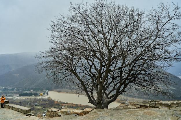 Enkele herfstboom (geen bladeren) op hoge heuvel