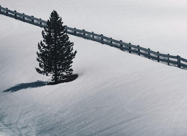 Enkele pijnboom naast een houten hek in een besneeuwde veld