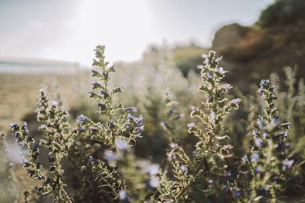 Enkele prachtige groene en paarse planten in de natuur op een zonnige dag