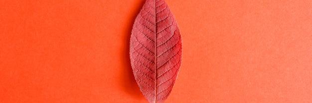 Enkele rode gevallen herfst cherry bladeren op rood