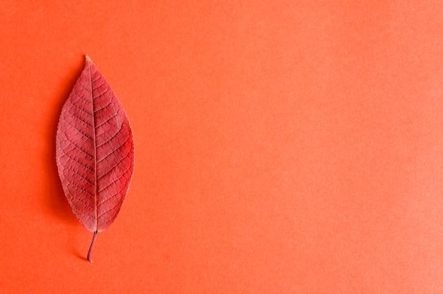 Enkele rode gevallen herfst kersenbladeren op een rood papier
