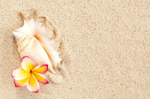 Enkele zeeschelp en roze en gele frangipanibloem op zandachtergrond met kopieerruimte, bovenaanzicht