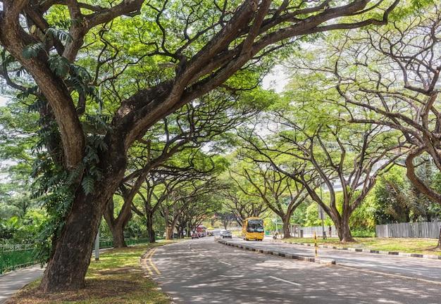 Enorme bomen op straat