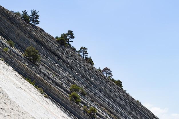 Enorme grijze rotsen met bomen tegen een stralend blauwe hemel in een wild strand. pittoresk zomerlandschap. steile helling en pijnbomen. de badplaats gelendzhik. rusland, kust van de zwarte zee