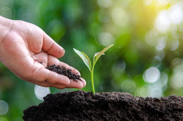Environment earth day in de handen van bomen die zaailingen verbouwen. bokeh groen vrouwelijke boom nat