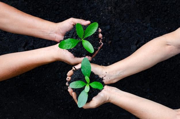 Environment earth day in de handen van bomen die zaailingen verbouwen