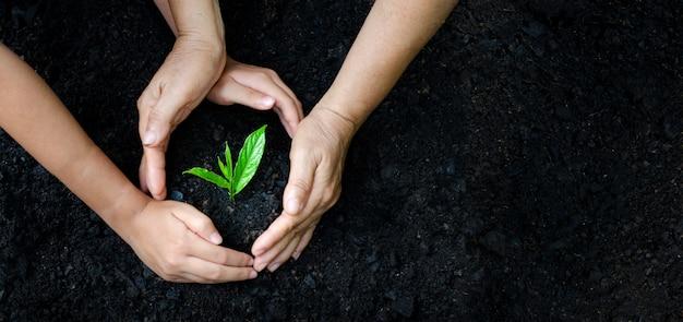 Environment earth day in de handen van bomen die zaailingen verbouwen.