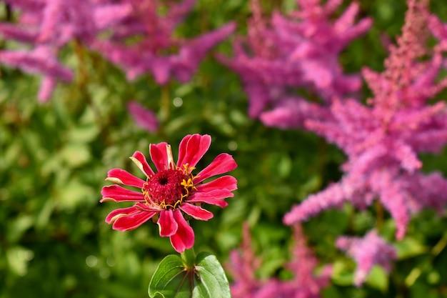 Er groeien prachtige roze bloemen in de tuin