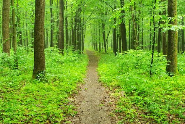 Er is een pad in het groene bos