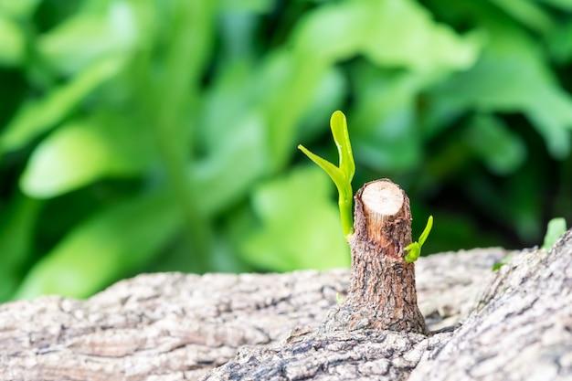Er zijn al nieuwe twijgen van bomen gekraakt