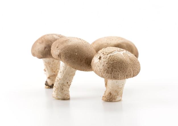 Eringii champignon