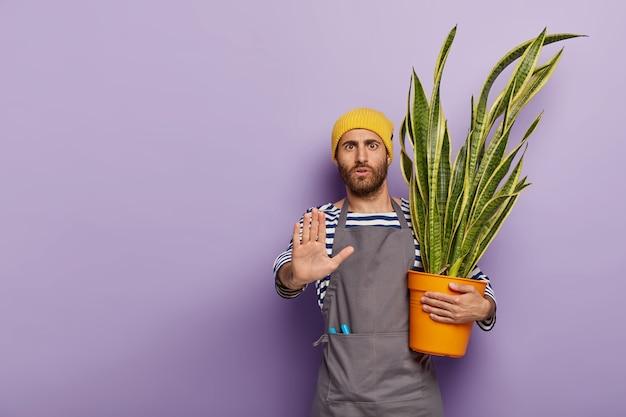 Ernstige geschokte mannelijke plantenliefhebber maakt weigeringsgebaar, zegt dat hij geen hulp nodig heeft, geeft om sansevieria die in bloempot groeit