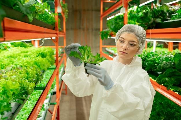 Ernstige jonge vrouw in pet, bril en beschermend pak die op een verticale boerderij staat en rucolablad aanraakt terwijl ze de plantengroei controleert