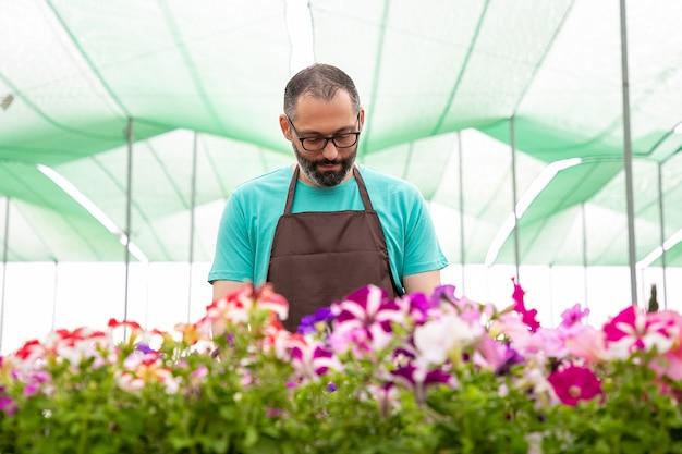 Ernstige mannelijke tuinman petunia's in potten groeien