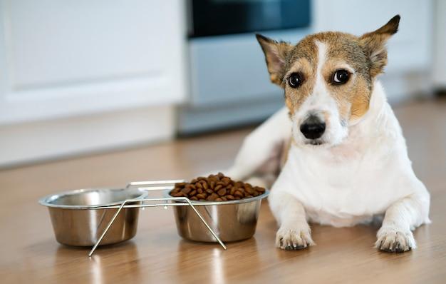 Ernstige ongelukkige hond zit voor een kom met droogvoer, weigering van voedsel voor huisdieren, veterinaire ziekten
