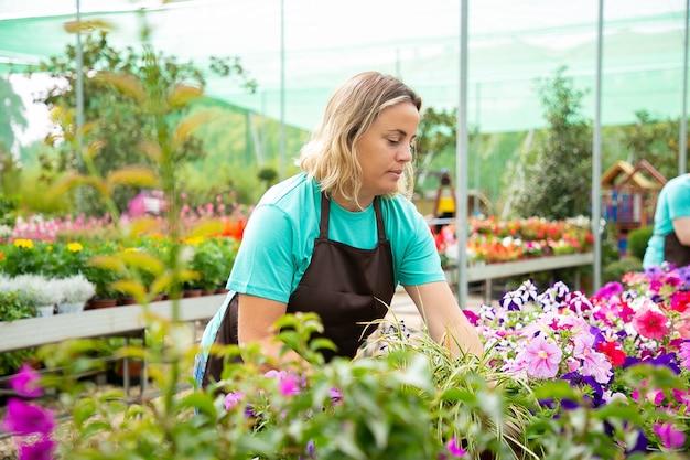 Ernstige vrouwelijke tuinman verschillende planten in potten kweken