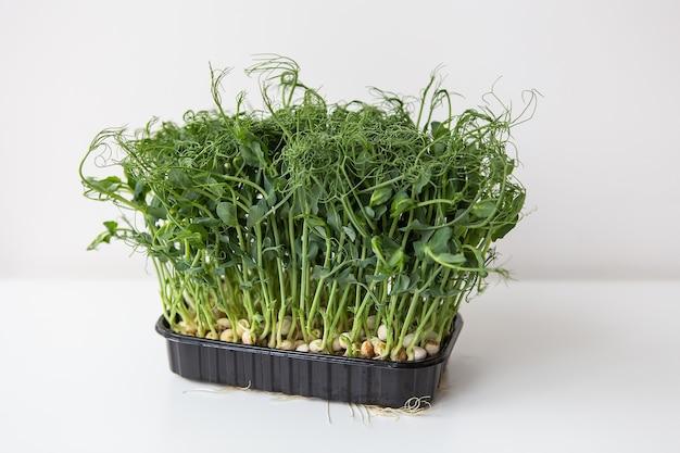 Erwt microgreen spruiten