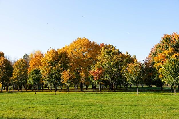 Esdoorn in de herfst. mooie natuurlijke achtergrond van bomen.