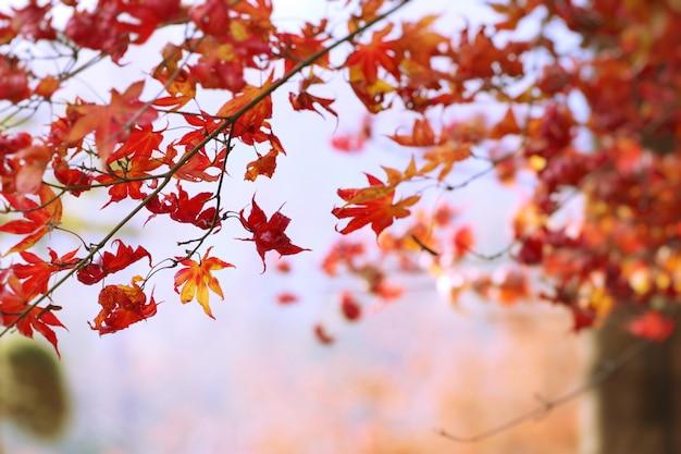Esdoornbladeren in de lente