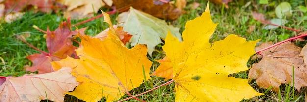 Esdoornbladeren tijdens de herfst in gras
