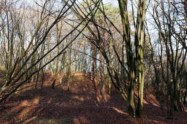 Esdoorngebladerte in het herfstseizoen tijdens bladval, esdoorn met veranderende rood wordende bladclose-up