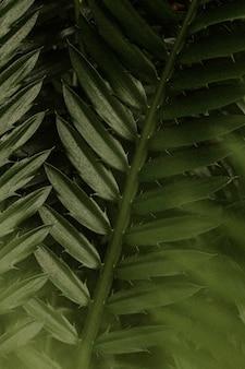 Esthetisch blad achtergrondbehang, tropisch natuurbeeld